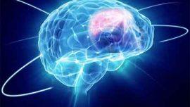 Ön Beyin ve Parapsikolojik Bağlar Prefrontal Korteks