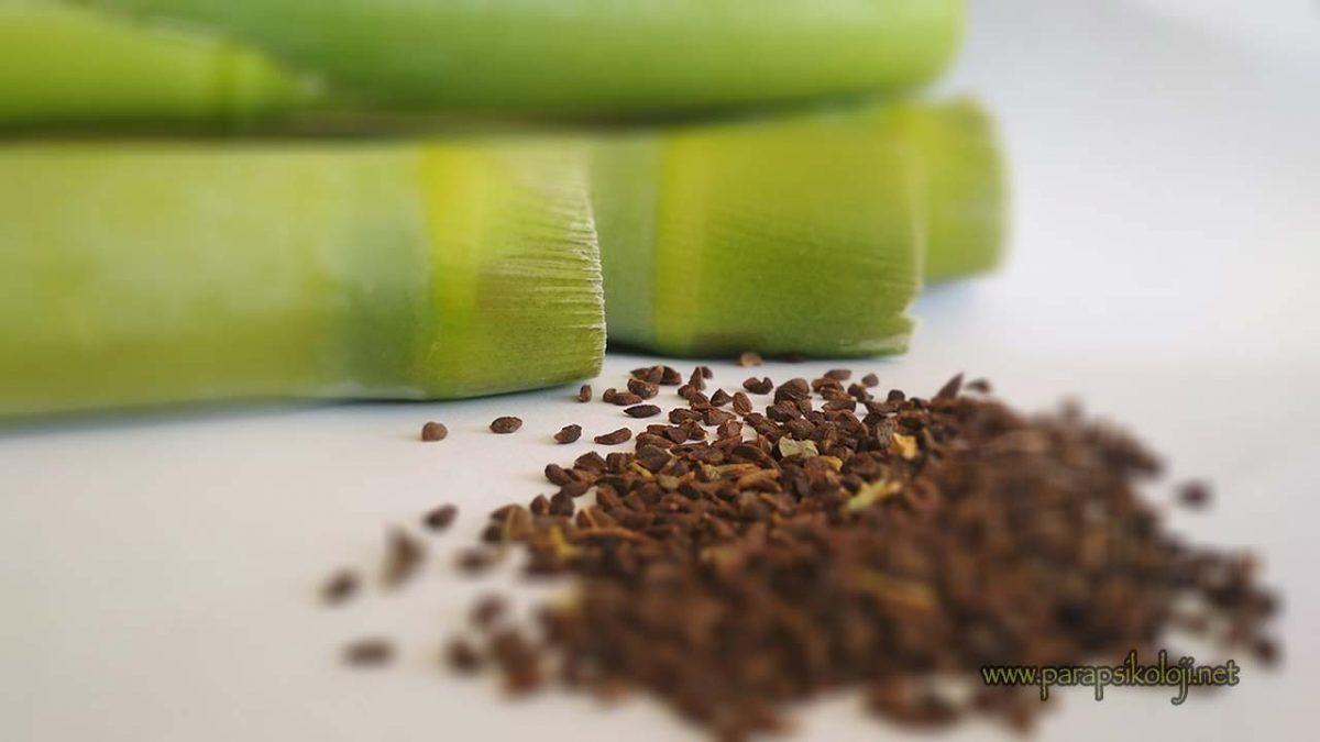 Üzerlikt ohumu, üzerlik tohumu nasıl kullanılır? dmt etkisi, faydaları, zararları ve üzerlik diyeti