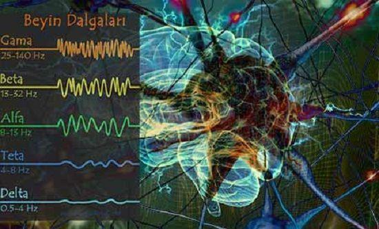Beyin Dalgaları; Gama, Beta, Alfa, Teta, Delta işlev ve Kullanımları