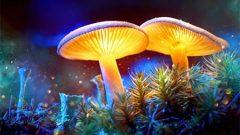Magic Mushroomların İnsan Bilincine Etkisi ve Sihirli Mantar Deneyimi