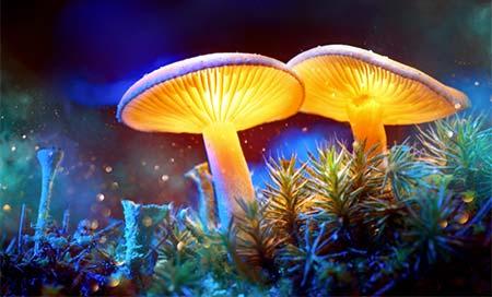 Magic Mushroomların İnsan Bilincine Etkisi. Sihirli mantarlar