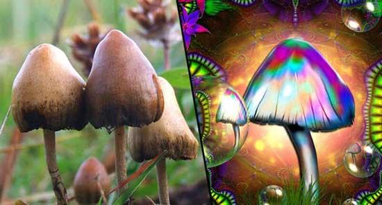 magic mushroom sihirli mantar